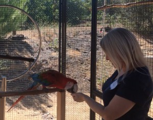 Greenwing Macaw training at an Avian Behavior International Clinic