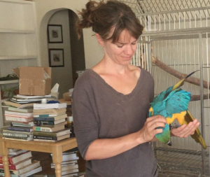 Abbi the foster macaw gets a scratch