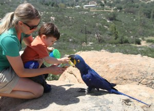 hyacinth macaw with toddler
